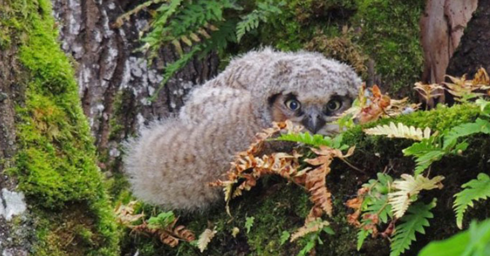 The Internet Just Realized Baby Owls Sleep Face Down And It S Adorable The Animal Rescue Site Blog