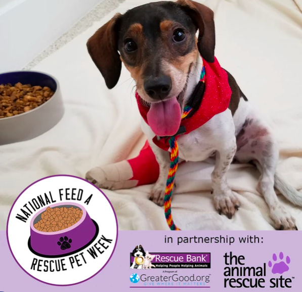 Feed A Rescue Pet 2020
