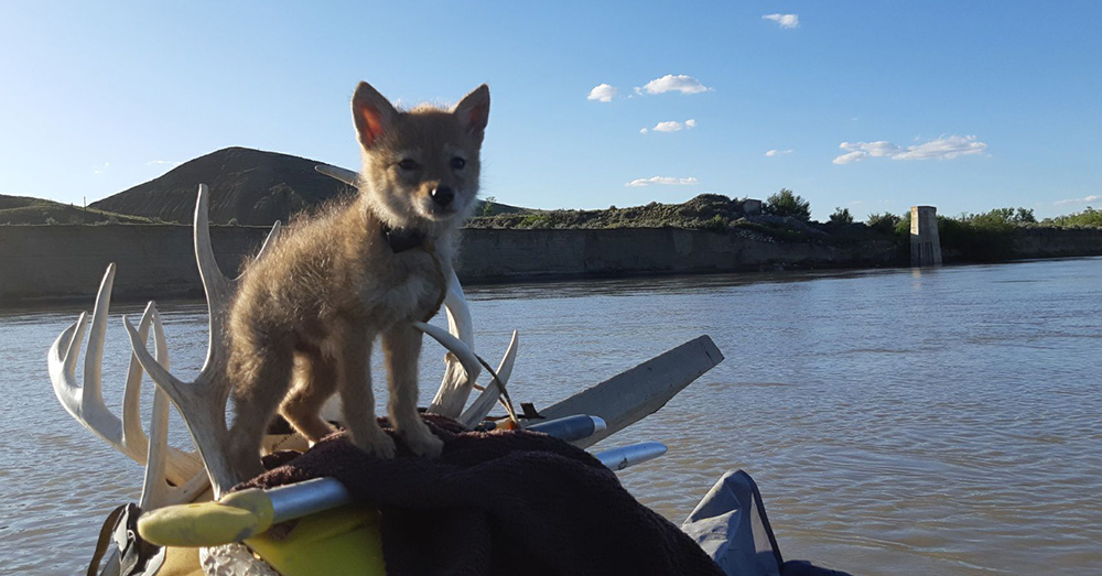 YipYip accompanied Justin on his river adventure.