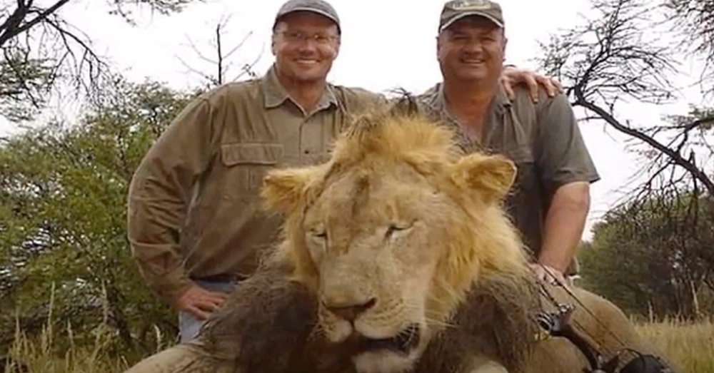 News Dentist Walter Palmer after he killed Cecil the lion in 2015.