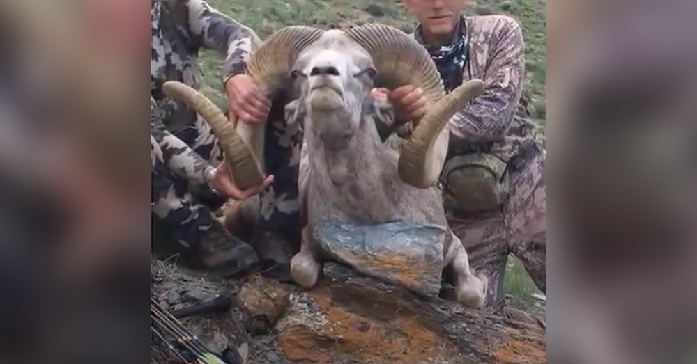 Palmer recently killed a rare argali ram in western Mongolia.