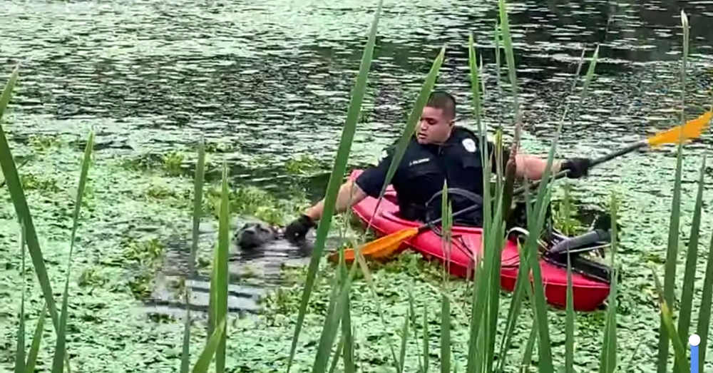 Officers Rescue A Poor Dog Struggling To Survive In Dirty Swamp