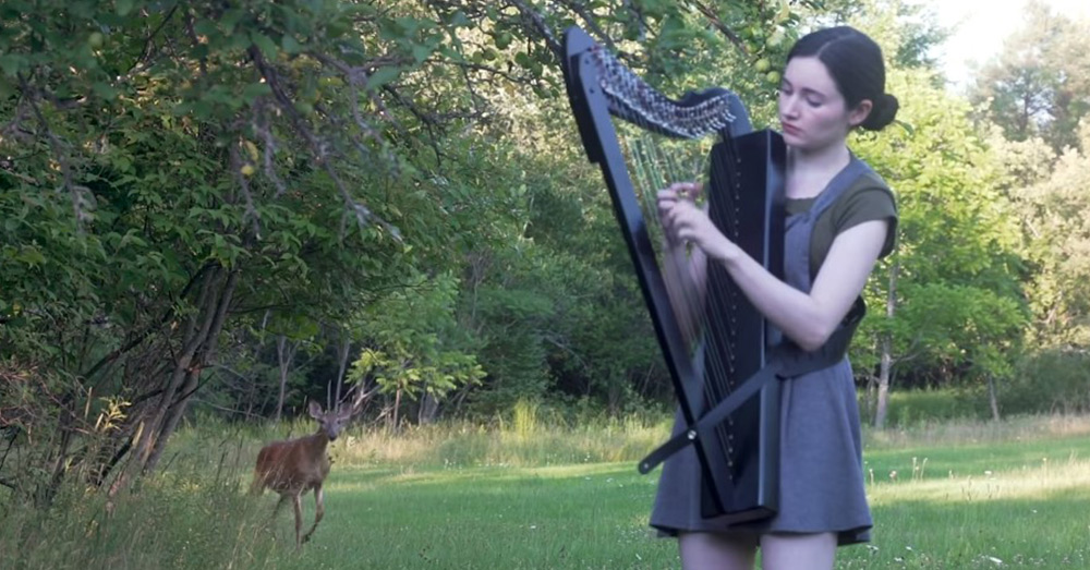 The deer draws closer as the harpist plays