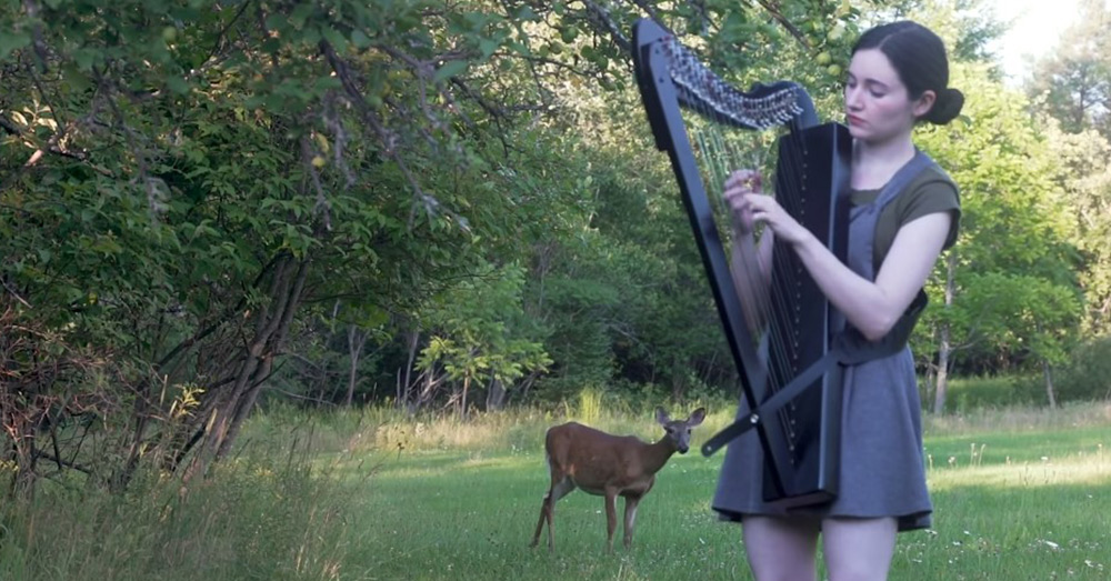 The deer comes very close to the harpist before going back into the woods.