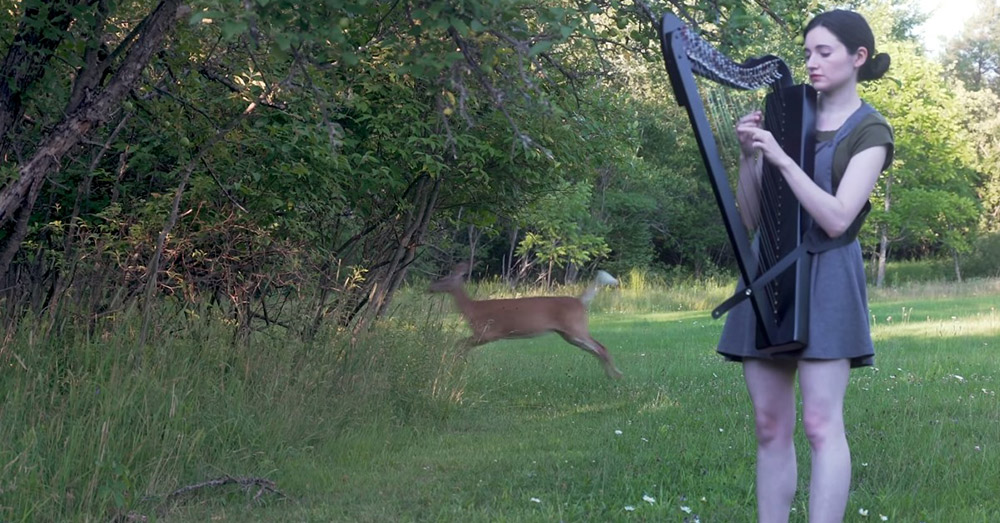 The deer jumps back into the woods.