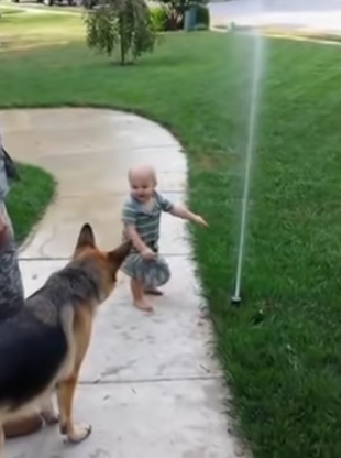 Little Kid Helps Scared German Shepherd Overcome His Fears Of The Sprinkler