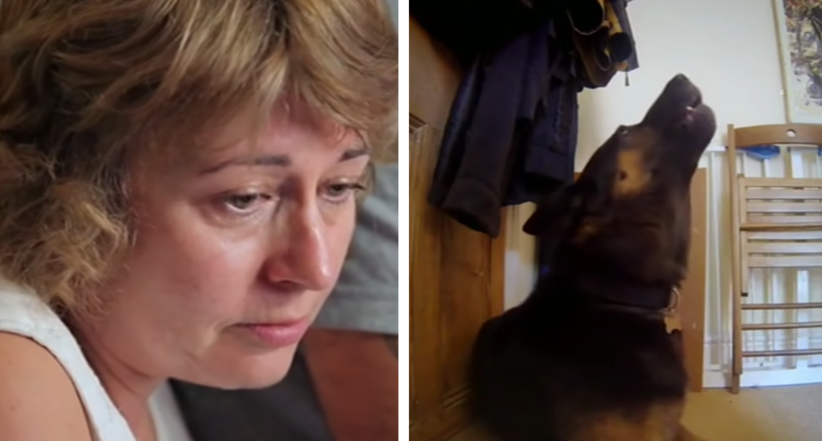 Hidden Cameras Show Owners What Their Dogs Do When They're Home Alone