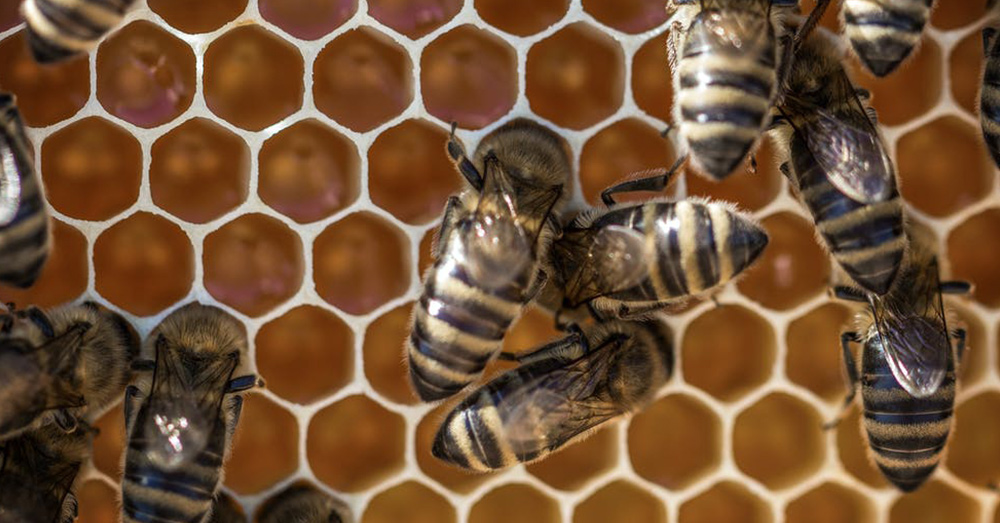 Neonicotinoids have been linked to massive bee die-offs in North America and Europe.