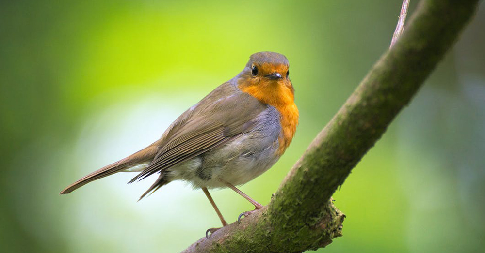 Many bird species are dying out or in danger due to the presence of neonicotinoids in their food chain.