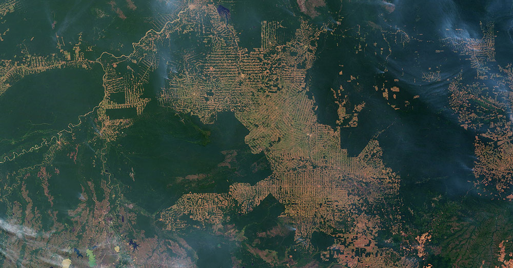 Deforestation has destroyed large swathes of the Amazon.