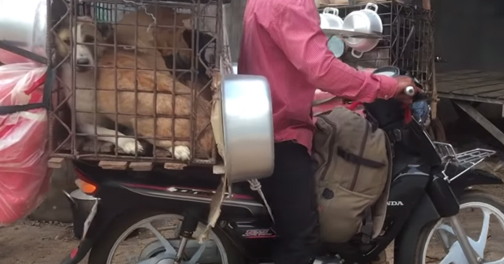 An estimated 2 million to 3 million dogs are slaughtered for meat in Cambodia each year.