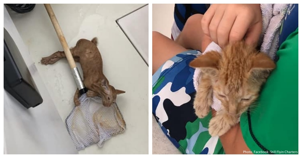 Fishing Trip Takes Surprising Turn When Crew Discover Kitten Struggling To Swim In Ocean