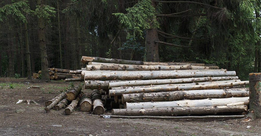 Deforestation and wood processing has taken a downturn in 2020, as well.