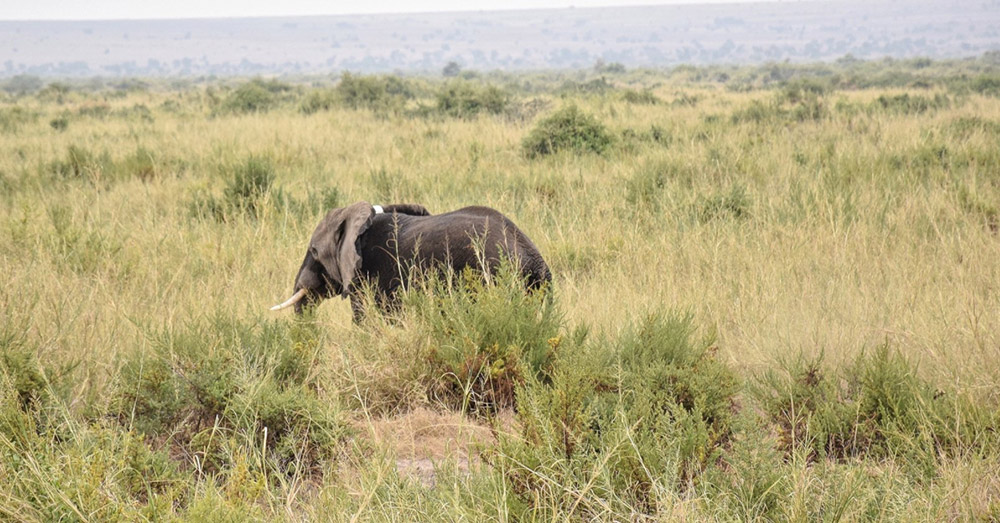 There were once just 16,000 elephants living in Kenya in 1989.
