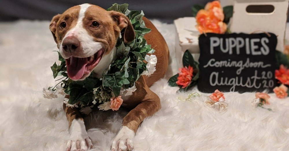 Pregnant Rescue Dog Poses For Adorable Maternity Shoot