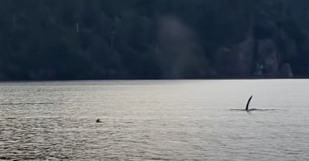 The Orca's dorsal fin is visible in the distance.