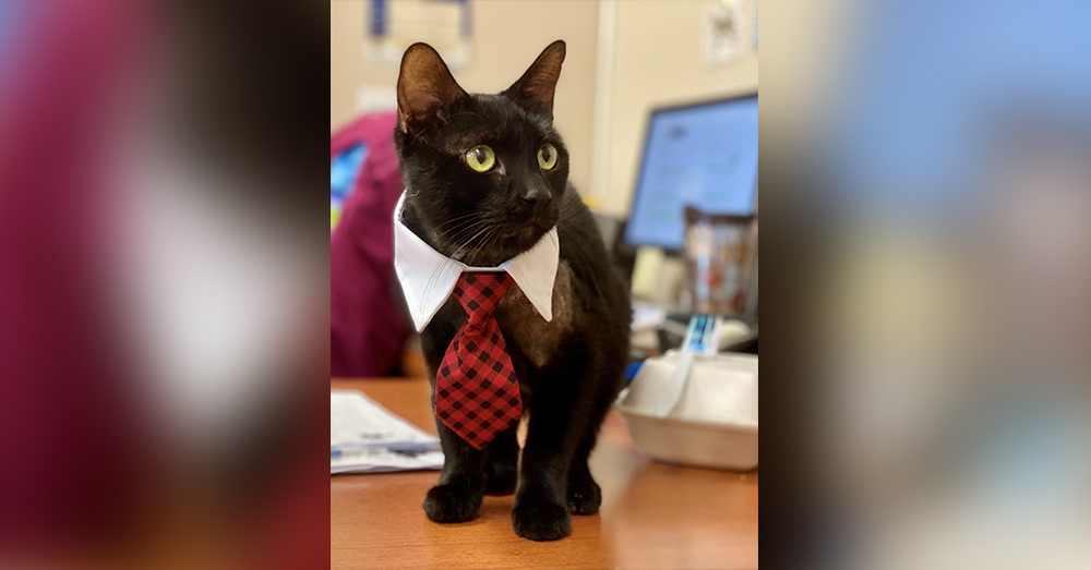 Robin now enjoys wearing ties to the office.