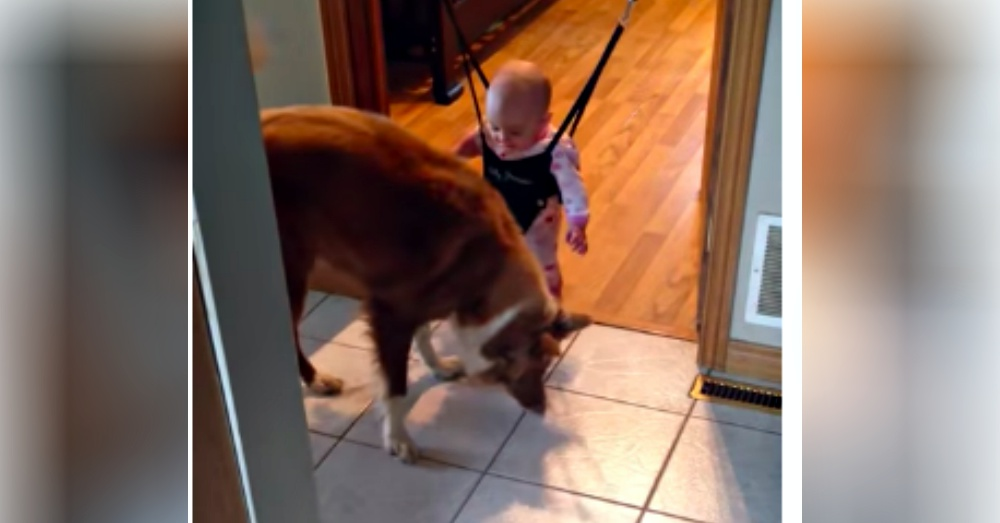 Dog Accidentally 'Teaches' Baby How To Jump