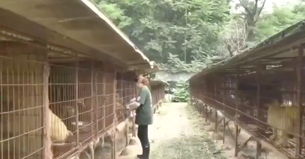 HSI helped close down this dog meat farm and rescue the animals that were held there.
