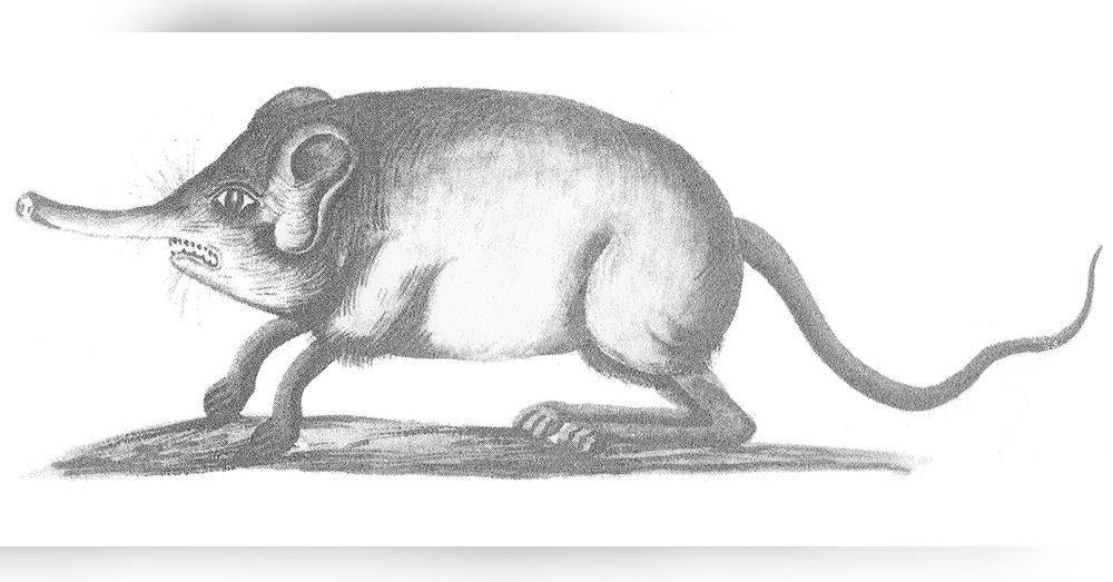One of the oldest known depictions of an elephant from 1685.