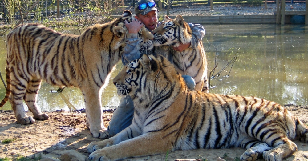 "Judge Finds ""Tiger King"" Zoo Was Operating Illegally, Demands Big Cats Move To ""Reputable Sanctuary"""