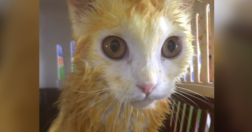 The turmeric left the cat's fur stained yellow.