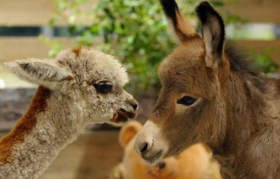 15 Of The Cutest Baby Donkeys You Have Ever Seen