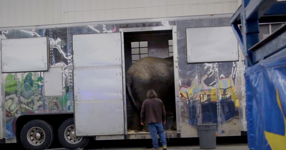 Circus elephants are often cramped in cages between stops.