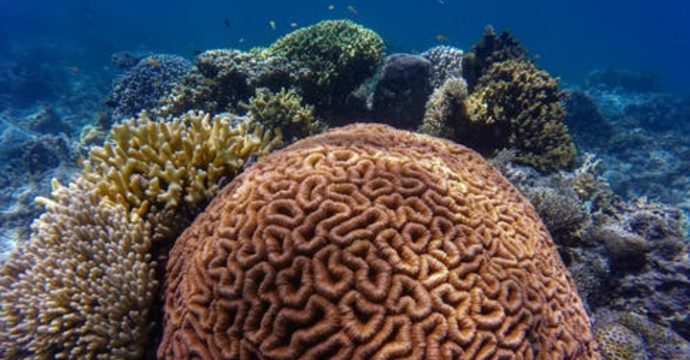 Climate change has raised the pH of the oceans, leading to coral bleaching and eutrophication.