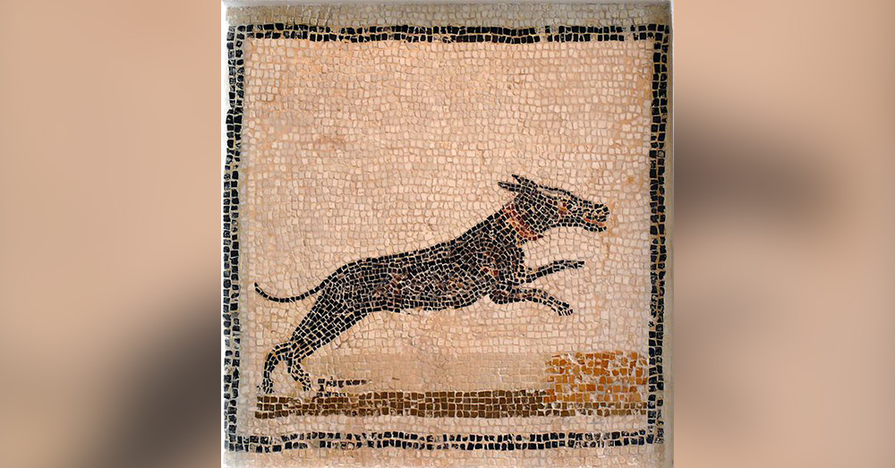 This mosaic of a dog from the second century was created about 18,000 years after the animals found in Italy had passed away.