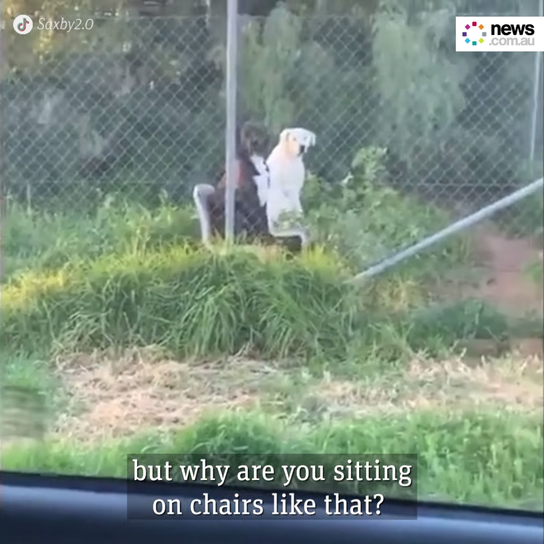 Man Has A Strange Encounter With Two Dogs Sitting In Chairs Like Humans On The Side Of The Road