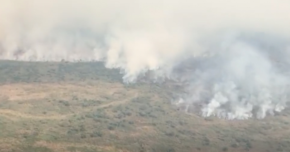 Thousands of square miles of the Pantanal are burning.
