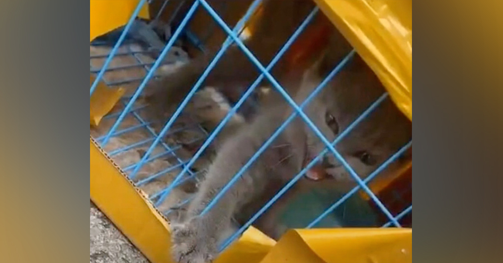 Cats, dogs, rabbits, and guinea pigs were found at the facility.