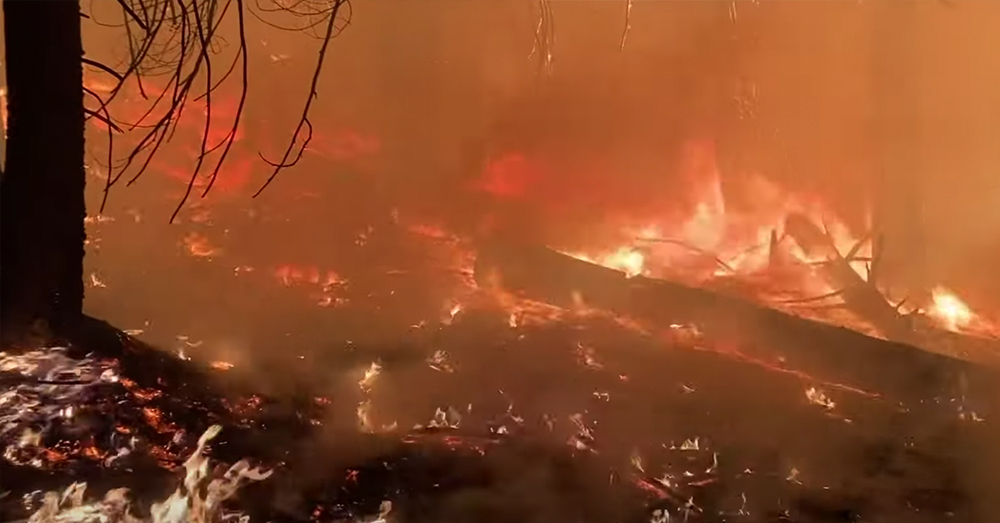 More than 4 million acres of California have been razed by wildfires in 2020.