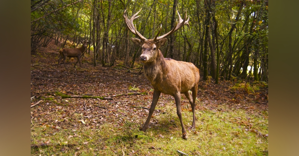 Woman Almost Dies After Being Gored By Deer Neighbor Was Illegally Keeping As A Pet