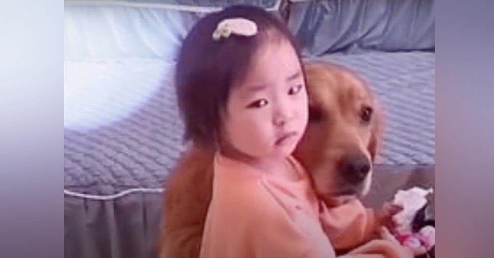 Dog Defends Crying Toddler When She Gets Yelled At By Mom