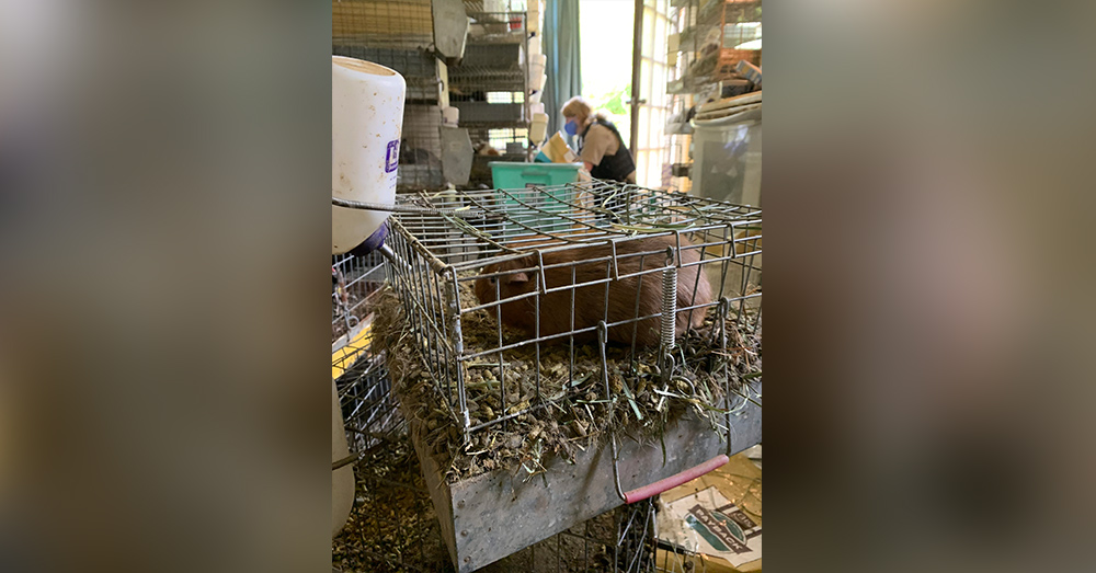 Some cages were so filled with debris and waste animals had little room.