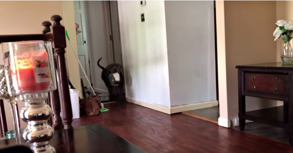 Hilarious Pit Bull Has Funniest Way Of Showing Mom It's Time To Eat