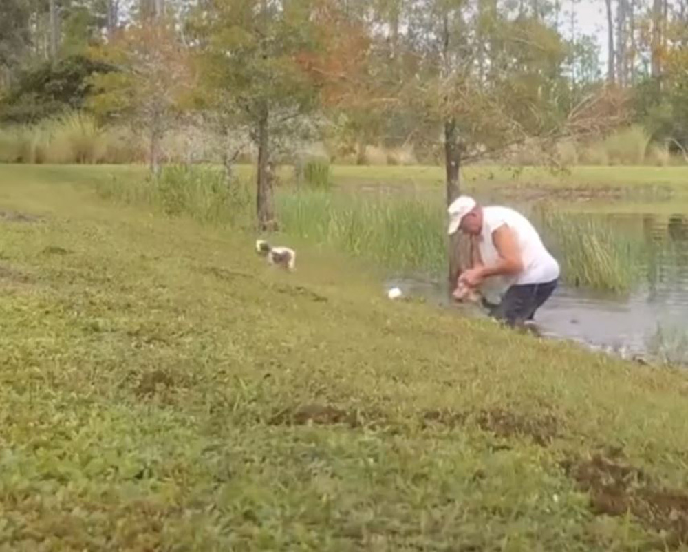 He dragged the gator onto shore and managed to free his dog.