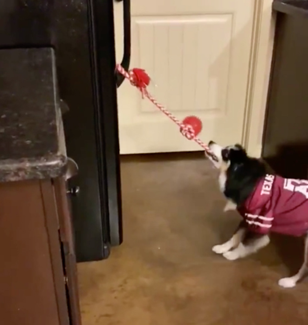 The dog pulls a rope to open the fridge.