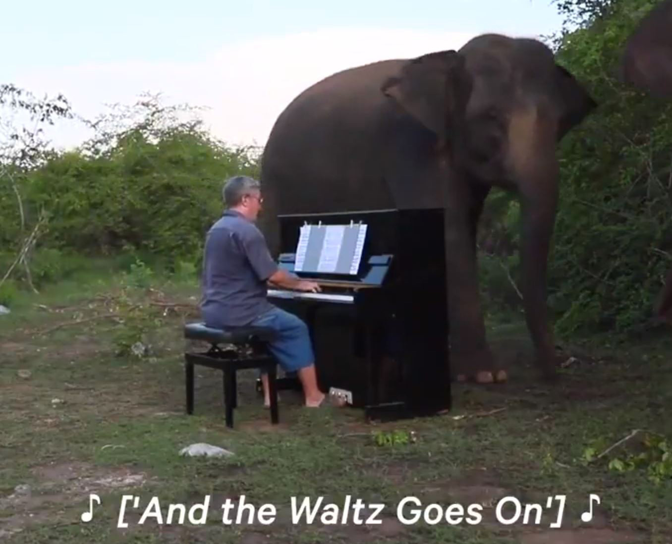 The elephants love hearing the music from Barton's piano.