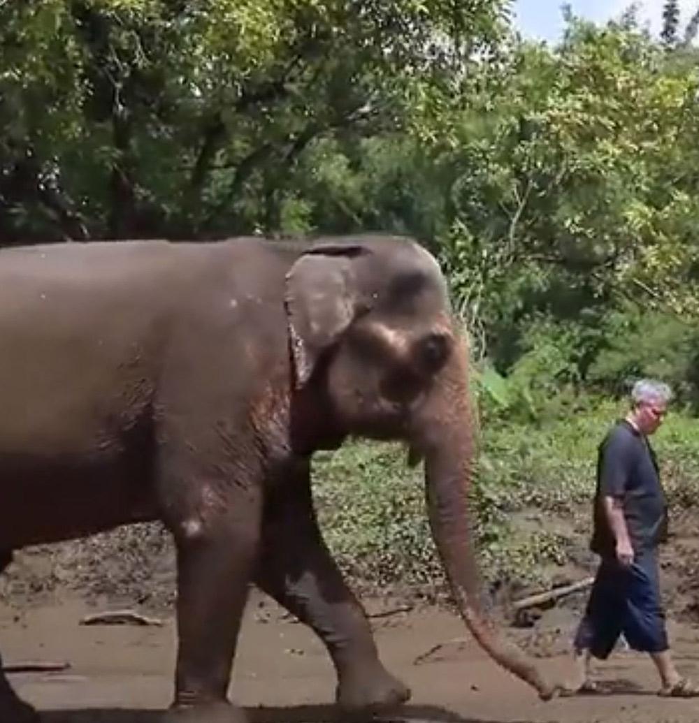 The elephants follow Barton to his piano.