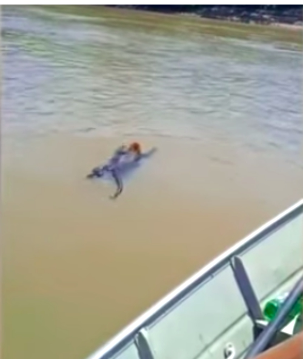 Fishermen Save Exhausted Howler Monkey From Drowning In River