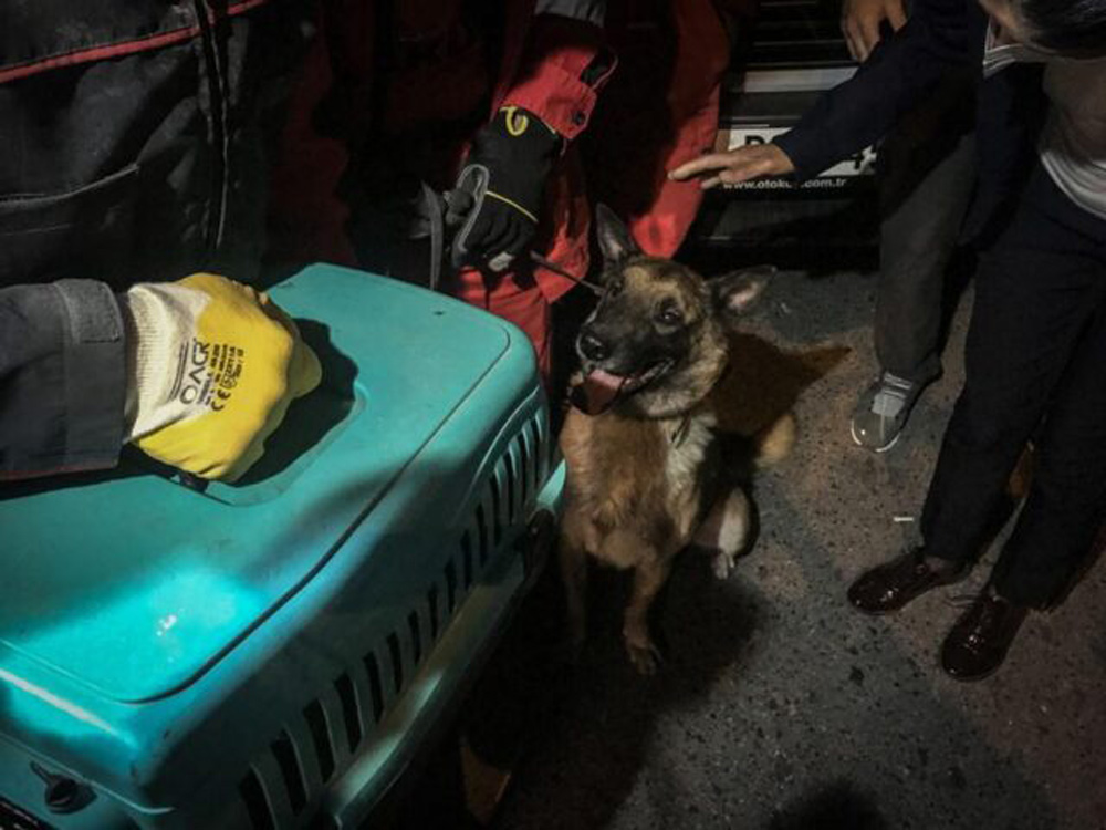 Bob the police dog assisted rescue crews after the Izmir earthquake.