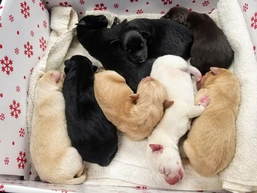 A box of puppies was dropped off at the Hoquiam library in Washington.