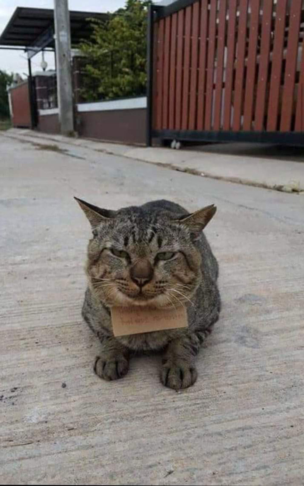 A note was left on the cat's neck by the shop owner who fed him fish.