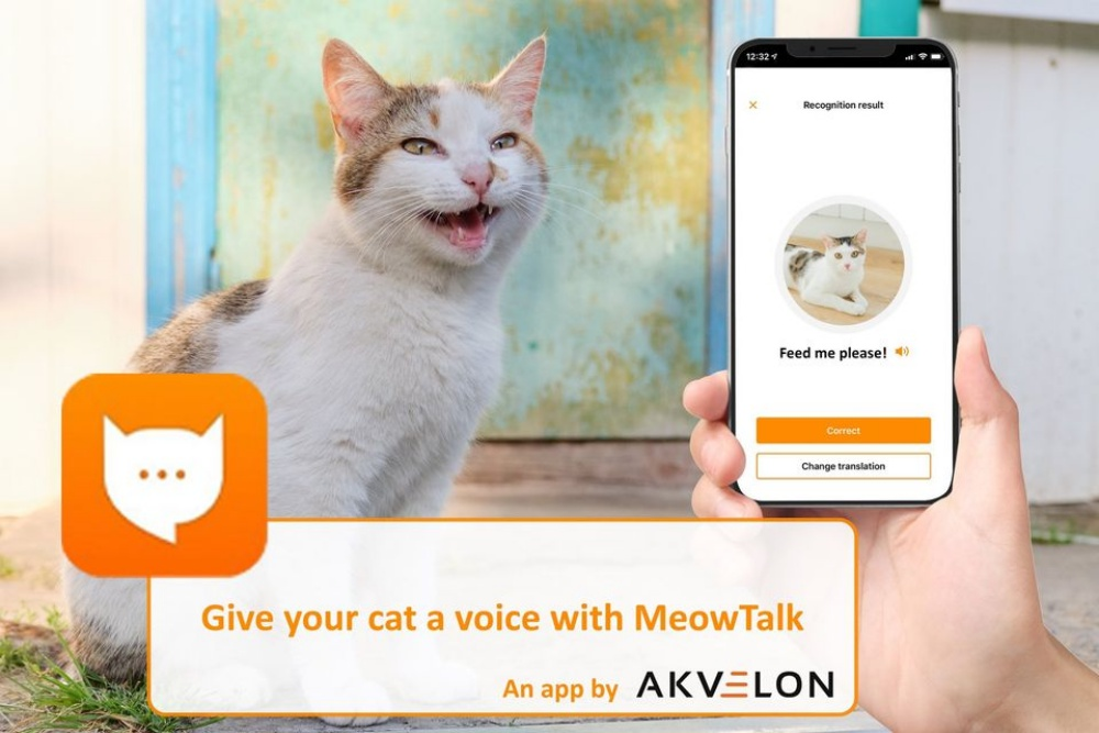 Engineer Designs App That Translates Your Cat's Meows Into Words | The Animal Rescue Site News