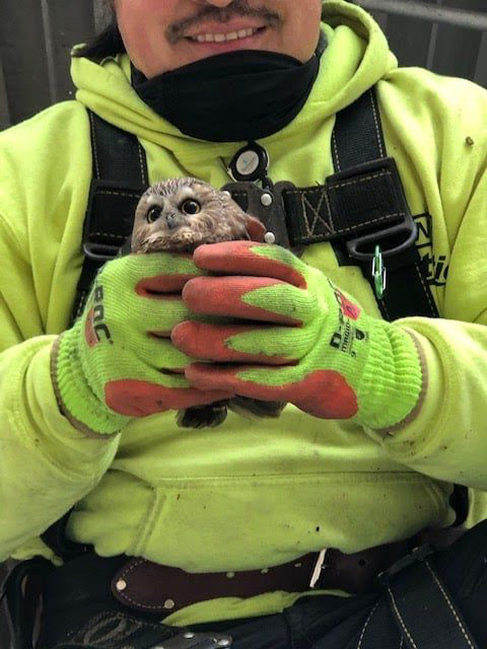 This saw-whet owl was rescued from a 75-foot fir tree in Oneonta, NY.