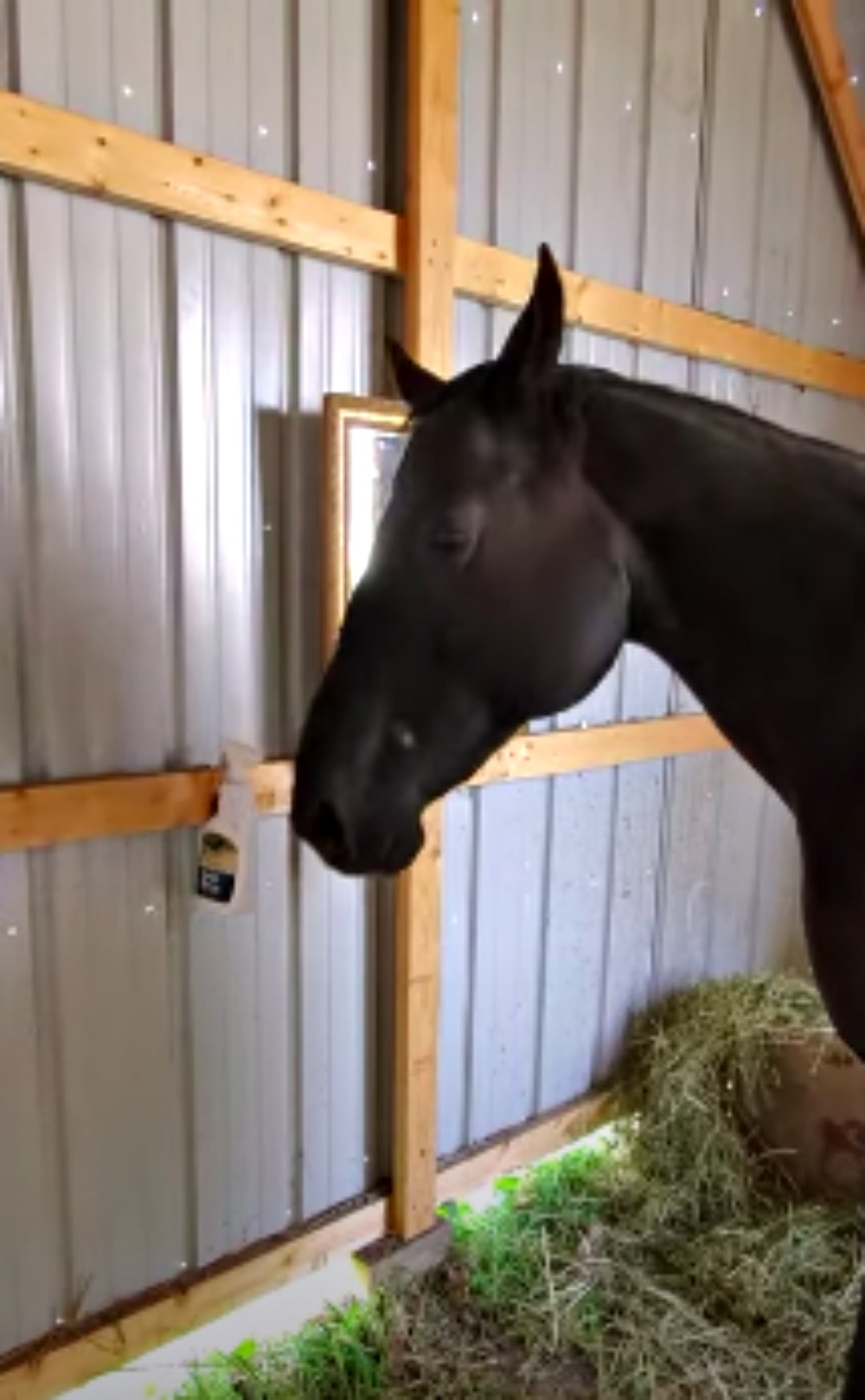 Horse Discovers Mirror For The First Time Making Owner Laugh Over Her Response