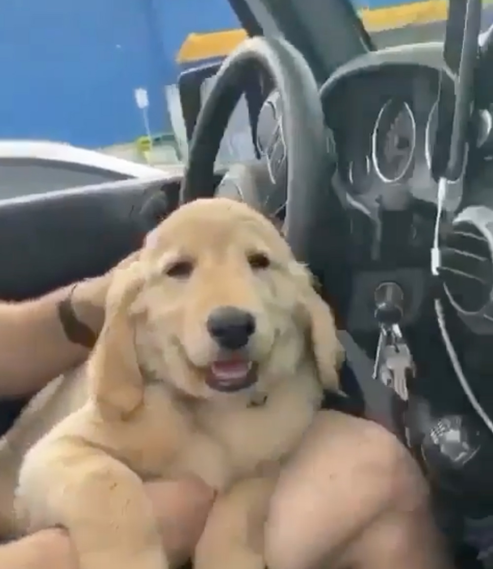 This smiling pup can't withstand the pull of sleep.